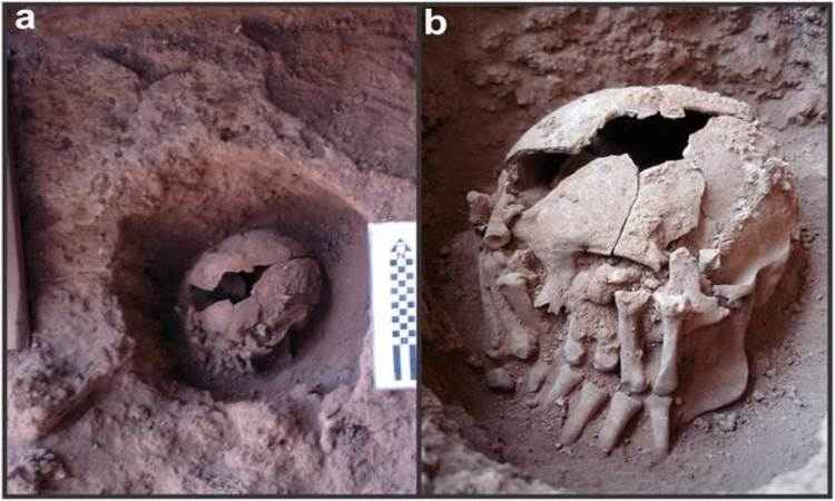 Crânio na sepultura, a 55cm de profundidade. Ao lado (D), detalhe da mão amputada que esconde a cabeça (foto: Max Planck de Antropologia Evolucionária/Divulgação )