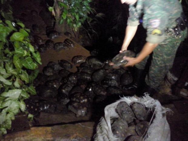 Animais estavam sendo transportados dentro de um caminhão - Foto: Divulgação / PM)