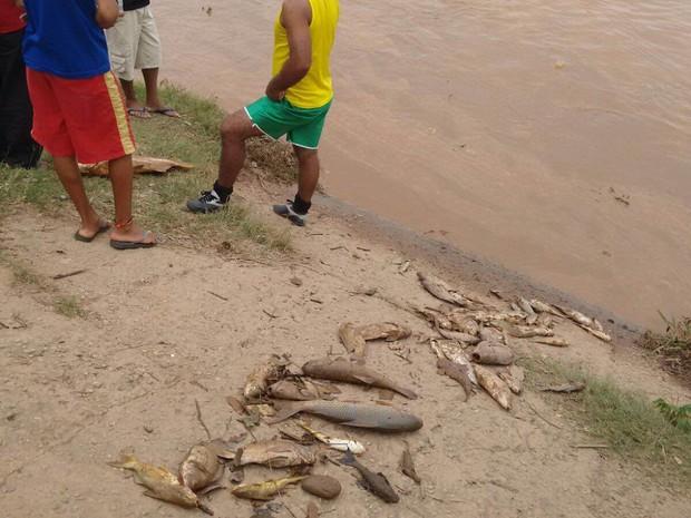Peixes foram encontrados mortos e sujos de lama próximo ao leito do Rio Doce (Foto: Divulgação / PM)