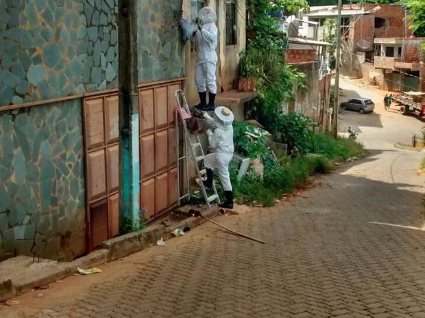 Abelhas sendo exterminadas em Governador Valadares - Foto: Divulgação/Corpo de Bombeiros