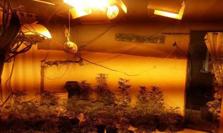 Traficantes usavam luz artificial em estufa na plantação da erva (Foto: PMMG/Divulgação)