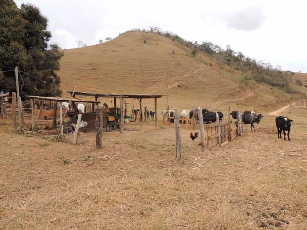 Ação investiga furto de gado no Leste de Minas (Foto: Polícia Civil/ Divulgação)