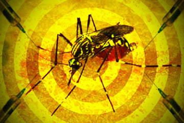 Pelo menos 23 casos são suspeitos de febre amarela noEstado. Desses, 14 já morrerarm (foto: ilustração de André Luiz Gomes/VEJA)